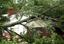 branch tree removal baltimore  maryland