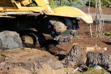 stump grinding  baltimore maryland